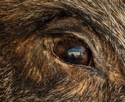 Jägerausbildung – Prüfung